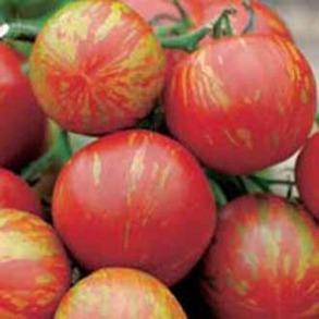 Tomat (Standard) Tigerella