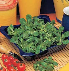 Maché sallad Lambs Lettuce Favor