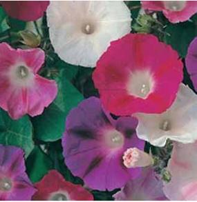Blomman för dagen Mixed
