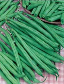 Böna Dwarf Bean Tendergreen
