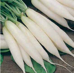 Radish Icicle (Long White)