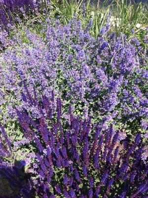 Blommor utanför entrén till Läjeskliniken i Träslövsläge, Varberg