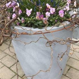 Plantering i utekrukor 2019