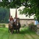 Häst & vagn sällskap