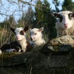 Vildas Fejen, Vildas Skodda och mamma Flora