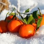 Soliga clementiner i snön - med signatur