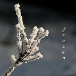 Vinterfrost. Vykort.