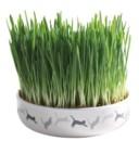 Keramikskål m kattgräs