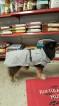 Reflekterande täcke Kenzo