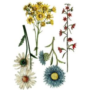 IOD Dekortransfer Wild Flower