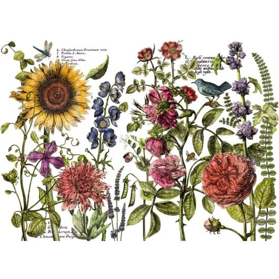 IOD Iron Orchid Designs Dekortransfer Botanists Journal. Monicas Butik är återförsäljare i Sverige