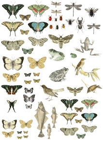 IOD Dekortransfer Entomology Etcetera