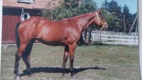 Jou-Jou, bilden tagen 1979