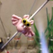 Rosa fladdermus