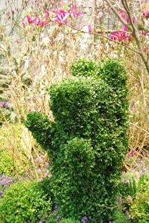 Buxus sempervirens/ Buxbom (Topiary/Animals)