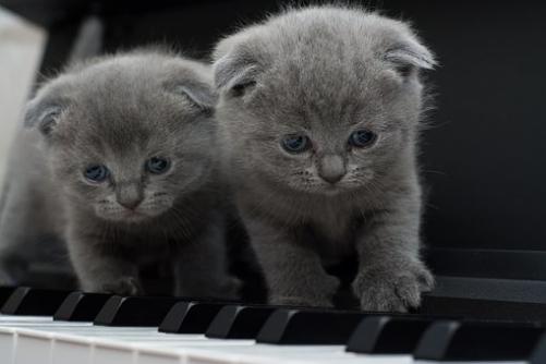 Katter kan också spela