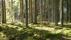 Den mysiga mosskogen