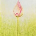 Lotusknopp
