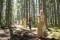 anne går först i skogen