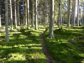 Stärkande skog