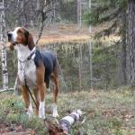 Stråkabergets Jack äg, Alf Sundvall