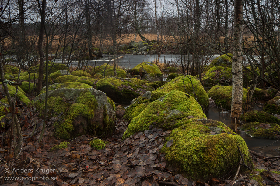 "Mossy stones at my ""home"" streem in Svärdsjö, Falun. Unbelivable that It is close to New Year and still no snow."