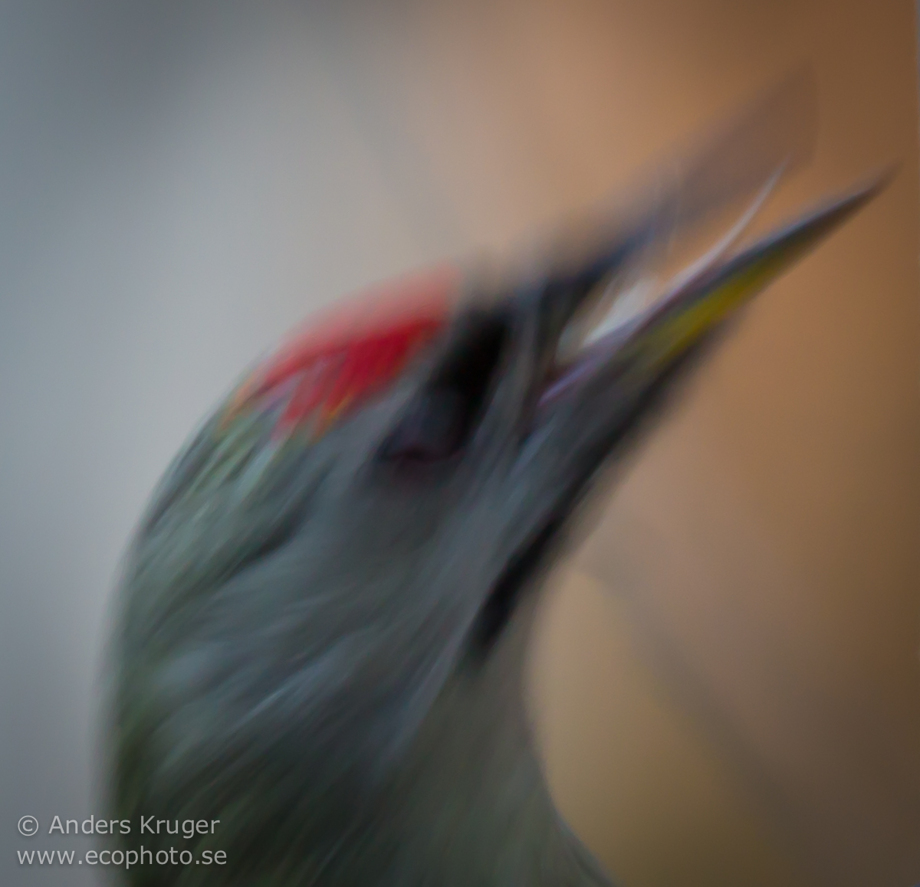 A grey-headed woodpecker (Picus canus) in impressionistic style.