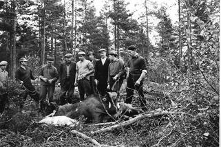 Älgjakten i Brevik 1957