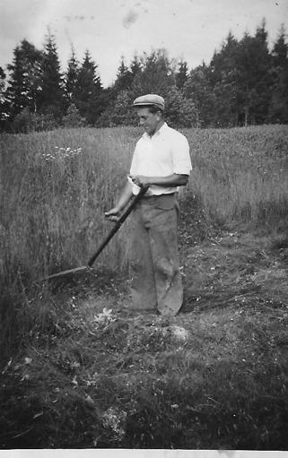 Ragnar Gustavsson i slåttern. Bilden sannolikt från tidigt 1930-tal.