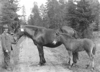 Albin Foss (1862-1954) med sto och föl