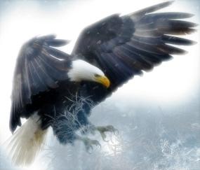 Jag är tacksam för Skaparens Mirakler som rensar vägen för att manifestera våra högsta drömmar.