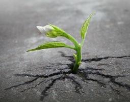 Jag är tacksam att Skaparen gör för oss vad vi inte kan göra för oss Själva, när vi är villiga att mirakel ska hända.