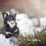 Chihuahuan Tina 3 år