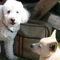 Hundarna Ozzy och Bernard