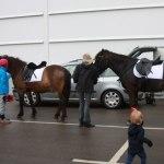 Djurens dag hästridning
