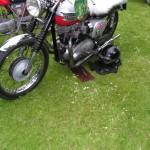 motorplantis (87)