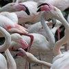 10_Flamingos