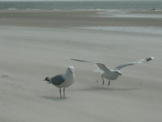 Det är en glädje när du lyfter och dina vingar bär!