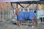 Vinterklädd Cesar
