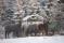 Hästarna vinter