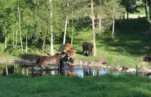Nordsvenska brukshästar ridning Halmstad Halland turridning häst och vagn
