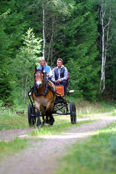 Häst & Vagn i natursköna Simlångsdalen Foto: Seglingsfotograf Thomas Johansson