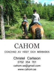 cahom coachad av häst och människa ridning Halmstad Halland