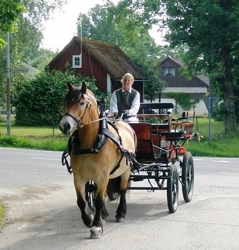 Häst och vagn Skallinge Gård CAHOM