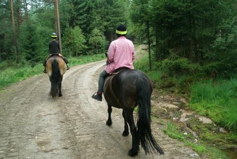 Skallinge Gård  erbjuder turridning med nordsvenska brukshästar i natursköna Simlångsdalen