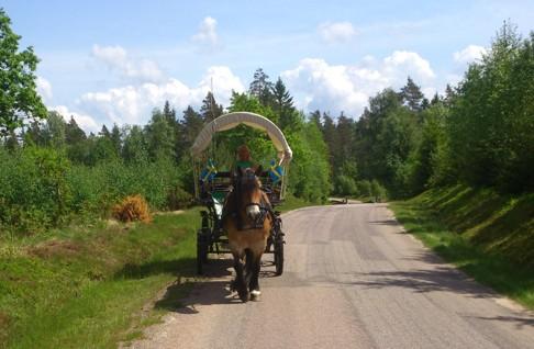 Skallinge Gårds Liiv på en häst och vagnstur i simlångsdalen 28 km från Halmstad