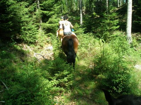 Ridtur barbacka på Skallinge Gårds turridningshästar i Simlångsdalen, Halland