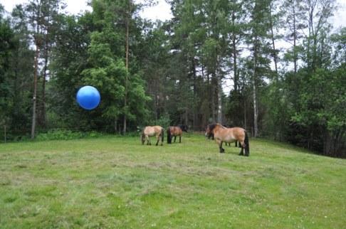 Skallinge Gårds turridningshästar spelar fotboll i Simlångsdalen Halland