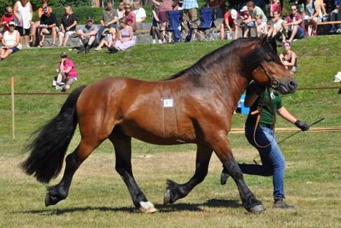 Midas 2016 min favorit från hästdagen i Boden...