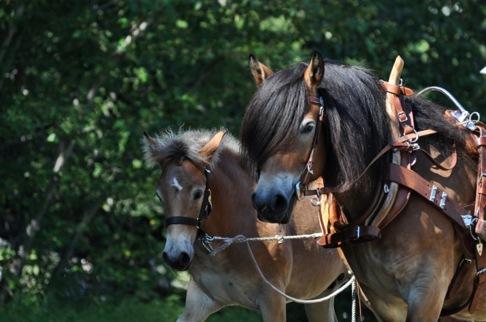 Draglag där hästarna får visa sin bästa form. Detta är den högsta klassen av fin form. Här är det bästa draglag som gäller!